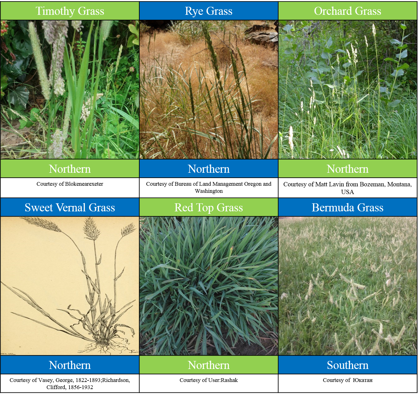 A Variety Of Common Grasses